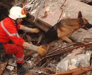 Smart Animal Rescue